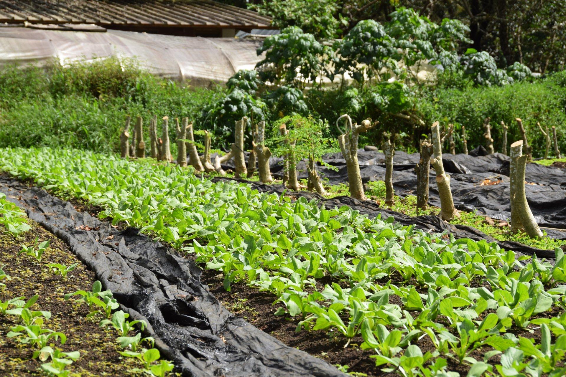 """Les produits agricoles vendus comme """"bio"""" doivent être garantis ou certifiés"""